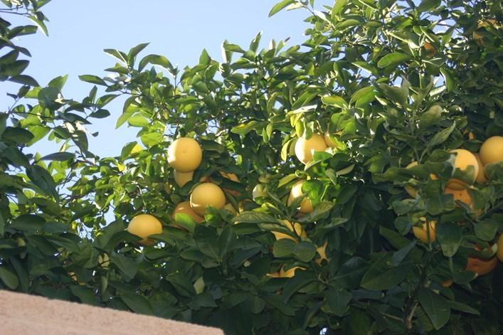 Citrus Science & Support