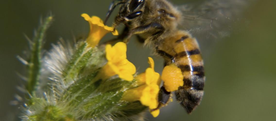 bee resources cooperative extension the university of