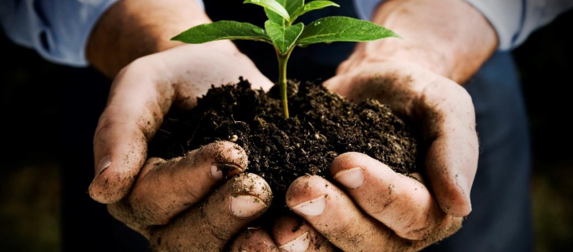 Pima Master Gardener program   Cooperative Extension   The ...