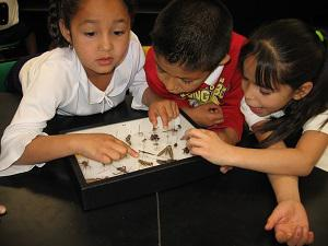Insect Discovery Classroom Visits | Cooperative Extension