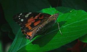 Butterfly from Nature's Notebook Video by Landmark