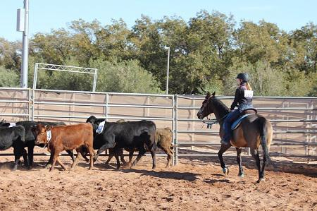 Team penning at 2018 Arizona State 4-H Horse Show