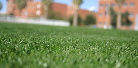 Overseeding Bermudagrass Lawns with Annual Ryegrass