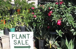 SAVE Saturday, October 5th for the Pima County Master Gardeners bi-annual plant sale!