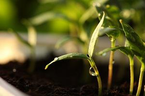 Germinated Seed Plants