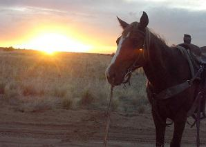Sunset with horse