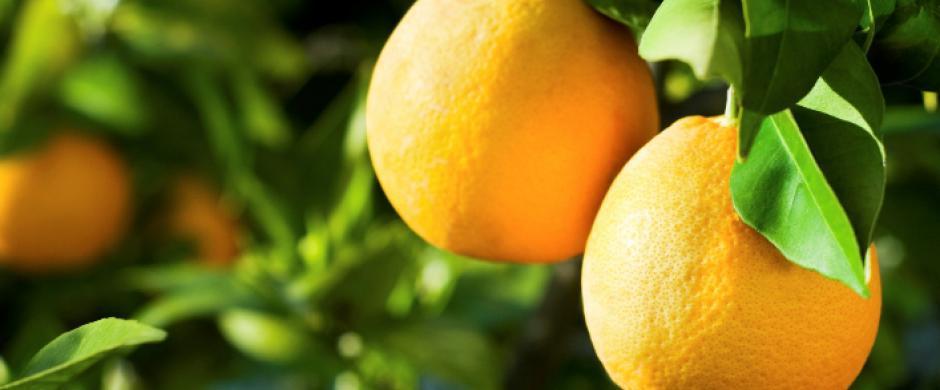 Maricopa County Master Gardener Citrus Clinic